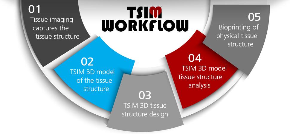 TSIM Workflow